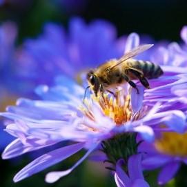 Цветы привлекают пчел электрическим стимулом