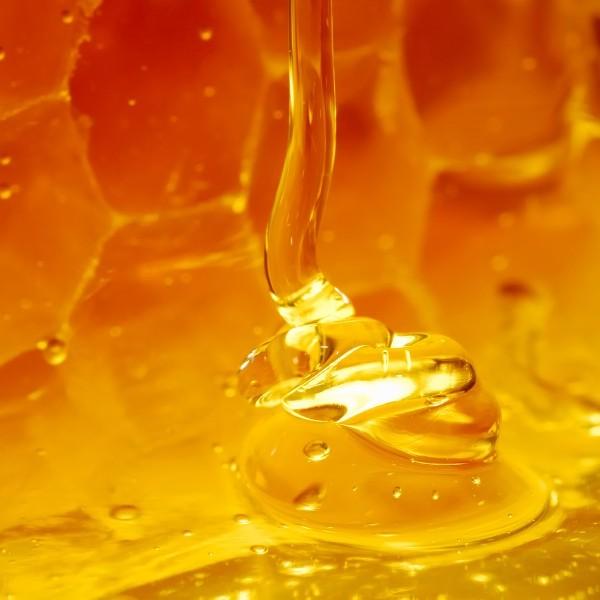 Из чего сделан падевый мёд