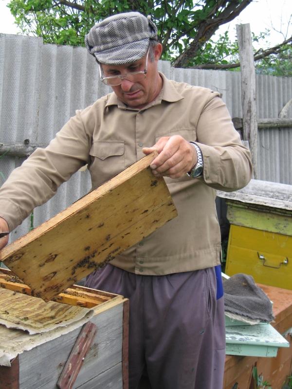 Самый главный пчеловод