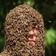 Борода из пчёл