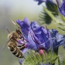 Экзотический синяковый мёд